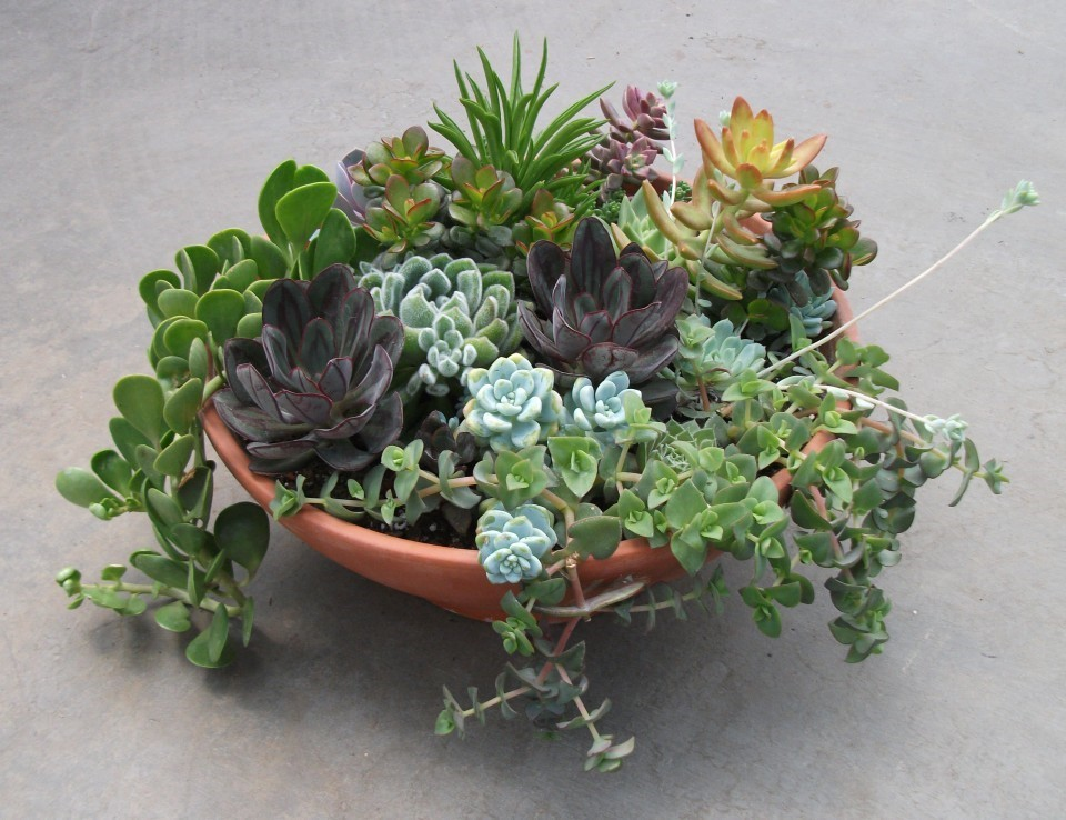 EARTH DAY Garden Party and Succulent Exchange!!! 2015