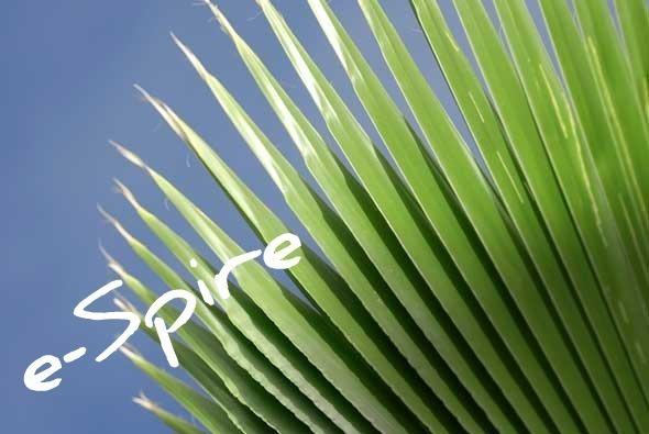 palms590