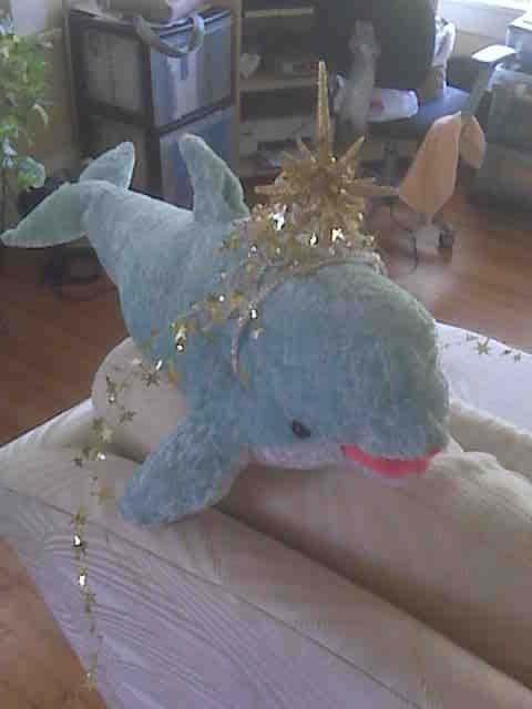 DolphinHDay1