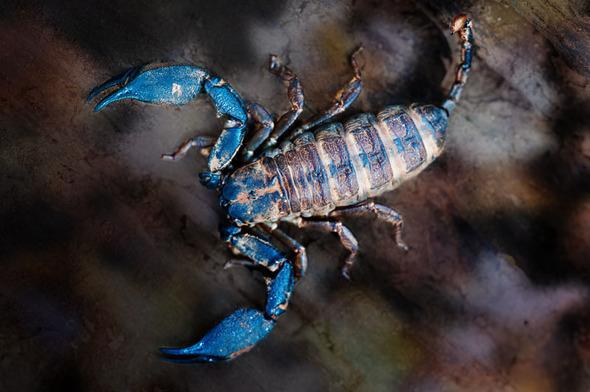Scorpion MS23704b