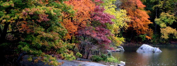 autumn trees along lake in central park