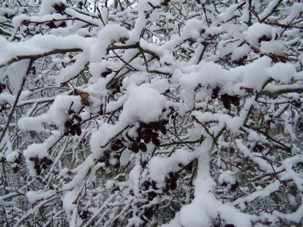 October Snow 022