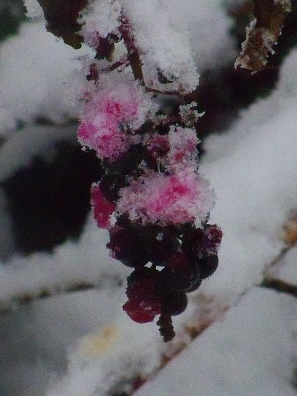 October Snow 053