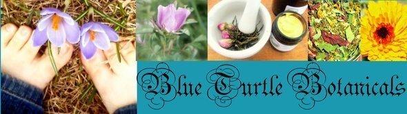 blue turtle blog banner