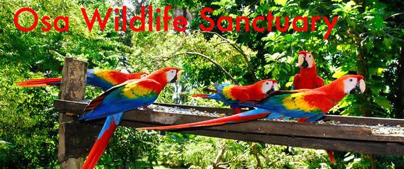 Scarlets-feeding