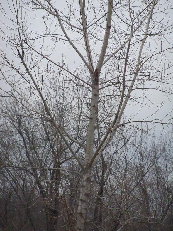 Solstice Trees 006