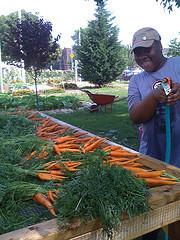 brianna-carrots