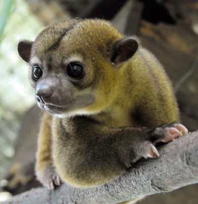Marta the Kinkajou is now free.