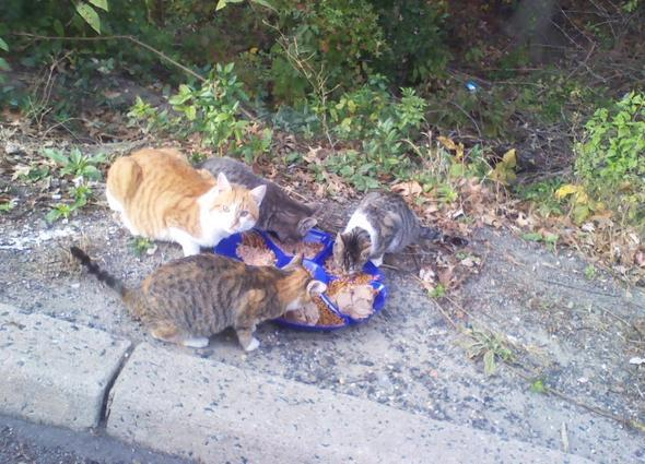 starving cats