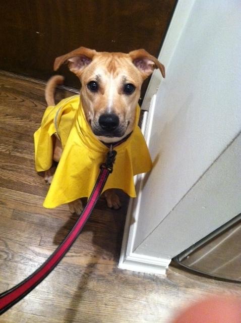 Sassy Raincoat