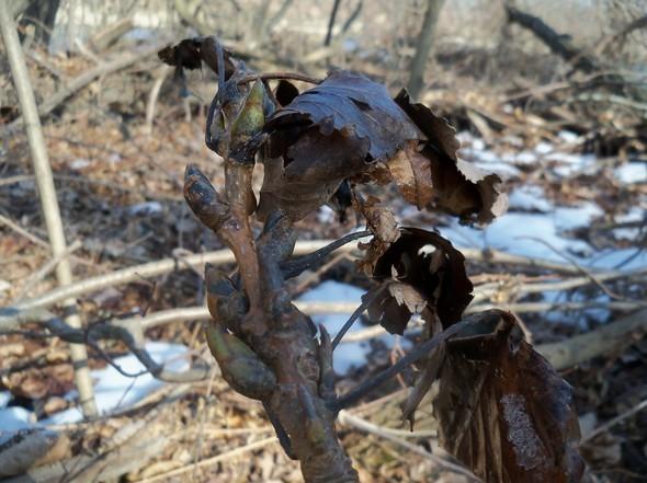 Cottonwood 2012 049