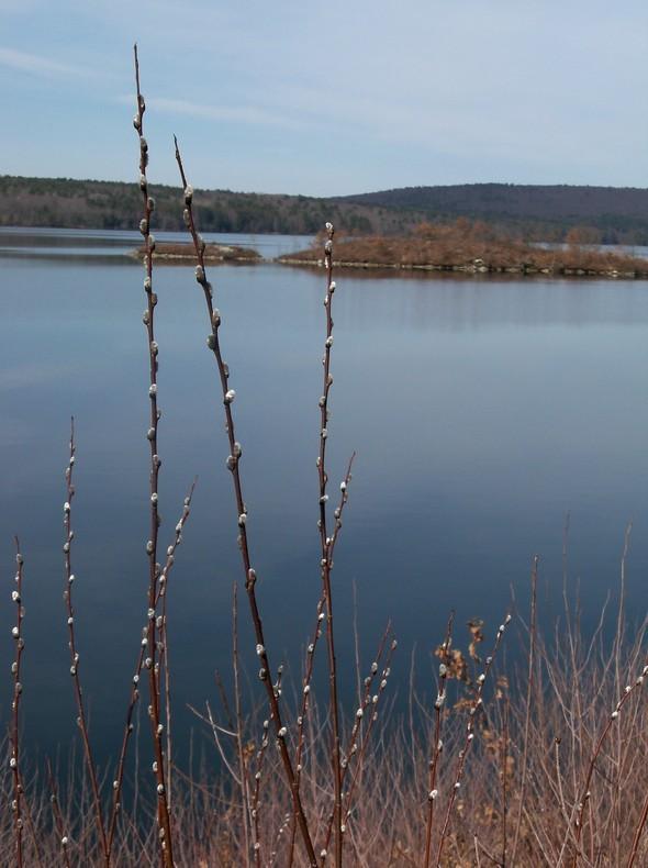Quabbin Poplar Hike 051