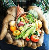 farmer-hands