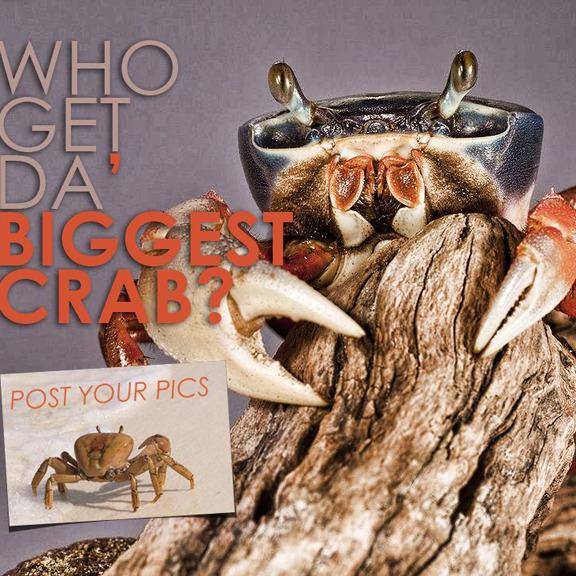 Crabfest-Square