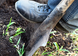 shovel-digging