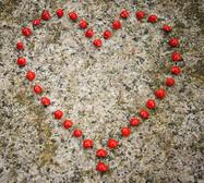 heart seeds heart