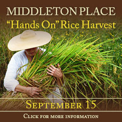 Middleton Place - Rice Harvest