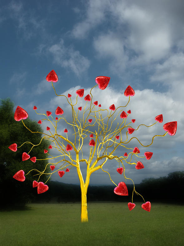 Sweet Tree-lowres