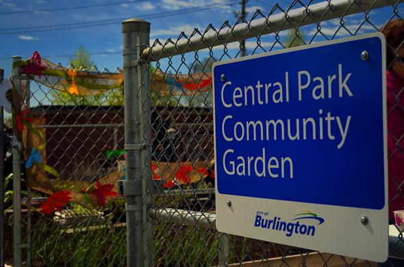 Community Garden 015