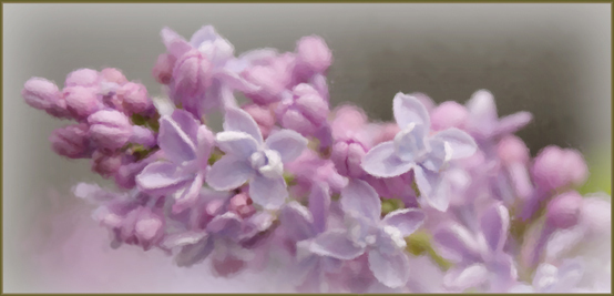 Lilacs4562 painted