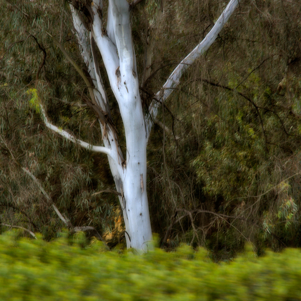 vogel larry eucalyptustree048 motionpictures-2005