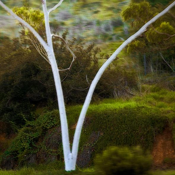 vogel larry eucalyptustree066 motionpictures-2005