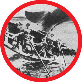 Whaling Boat   Tail