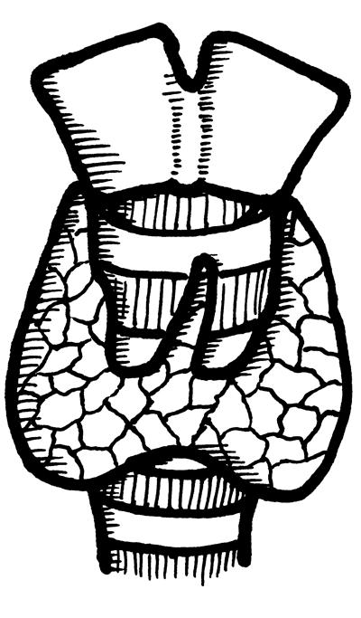 thyroid  nolabels 400
