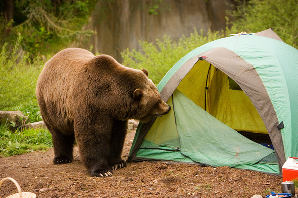 camping-with-animals