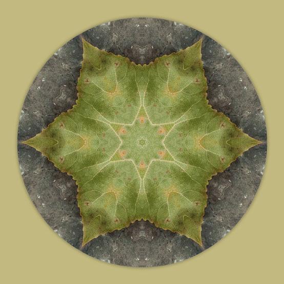 Birch Leaf Mandala 2 ©GSHaile