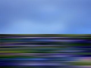 wildflower21b