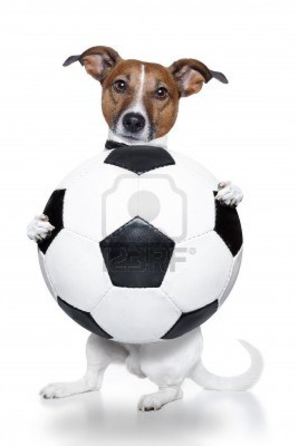 dog-with-soccer-ball19402-0