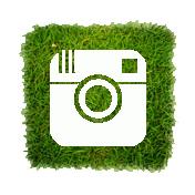 Greenpop Instagram