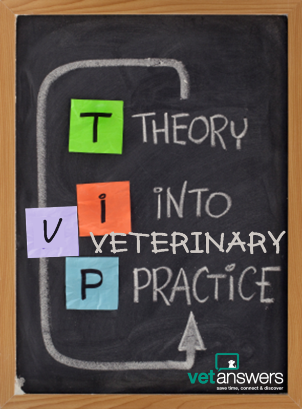 Top Veterinary Tips