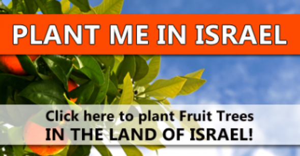 Plant-tress-in-Israel-1200X627