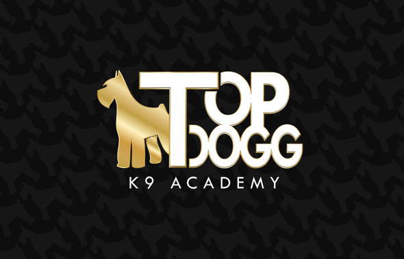 td-academy-back  1