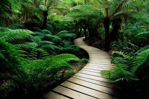 zen path