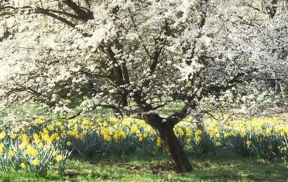 03 Springtime Blossom orig