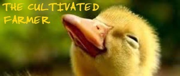 Chick2header