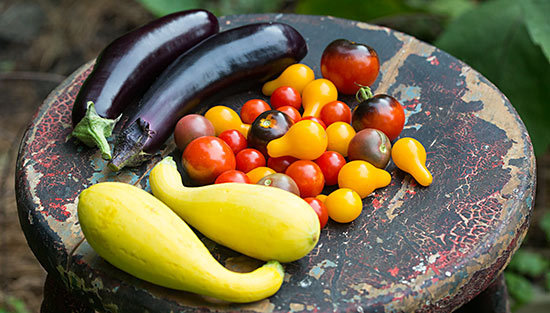 eggplant-tomatoes-squash