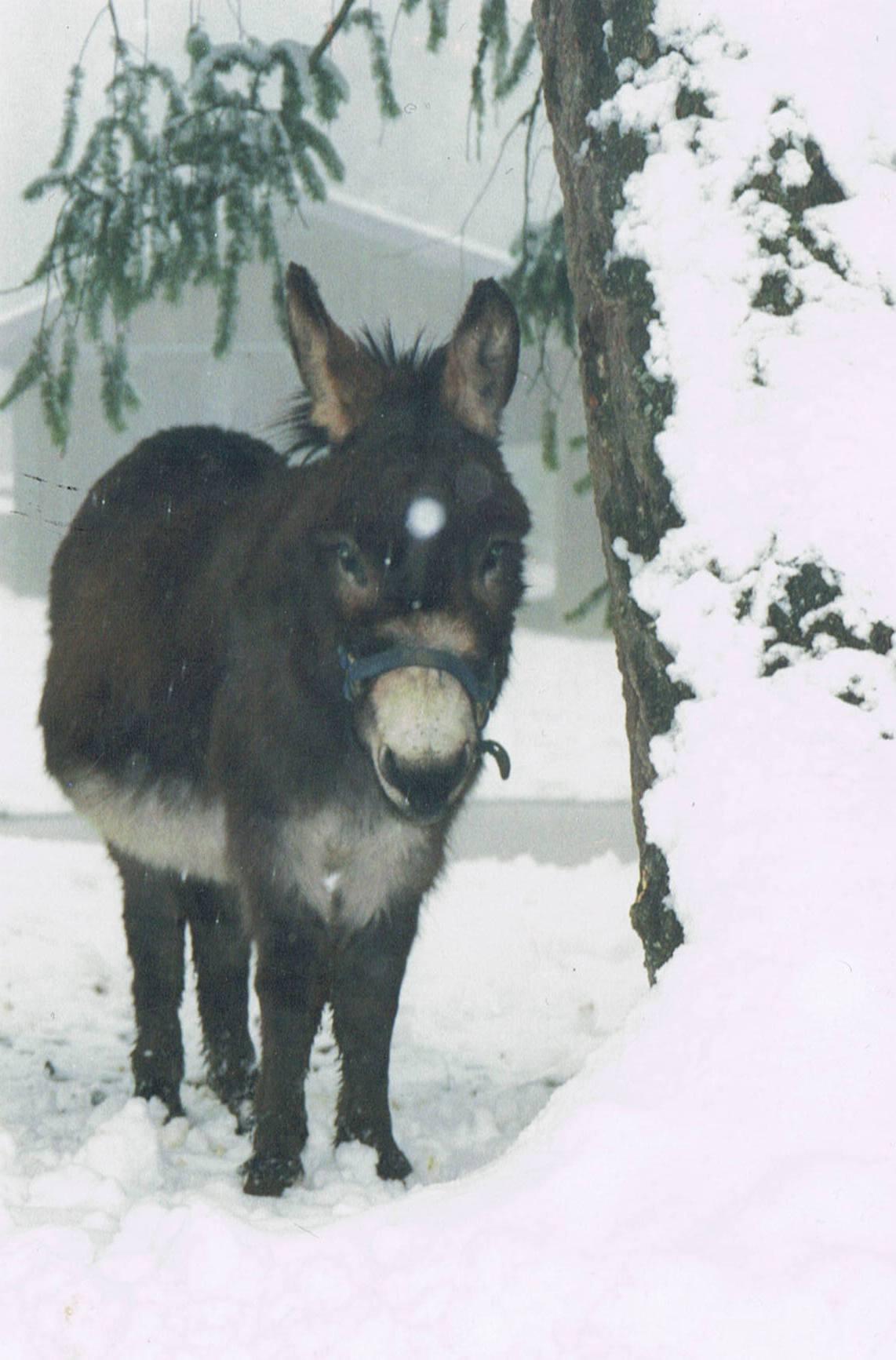donkey7