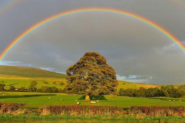 hope-rainbow-tree