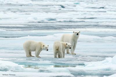 Mohan Polar Bears 400 wide promo advert
