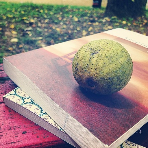 walnut-512x512