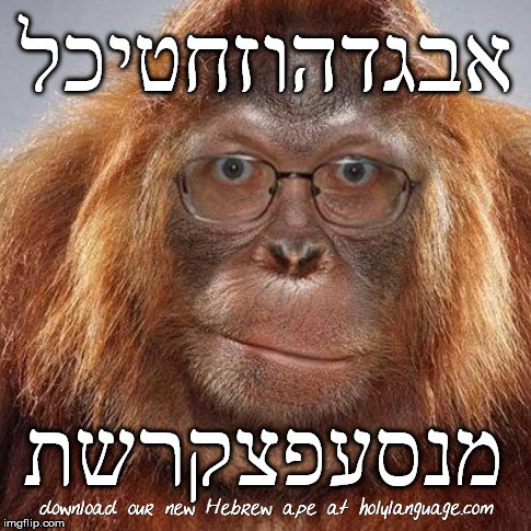 hebrew ape