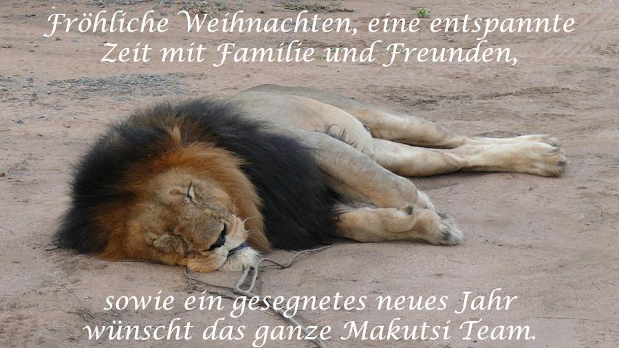 lion sleep de