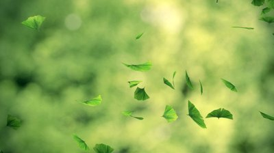PICT - Gingko leaves