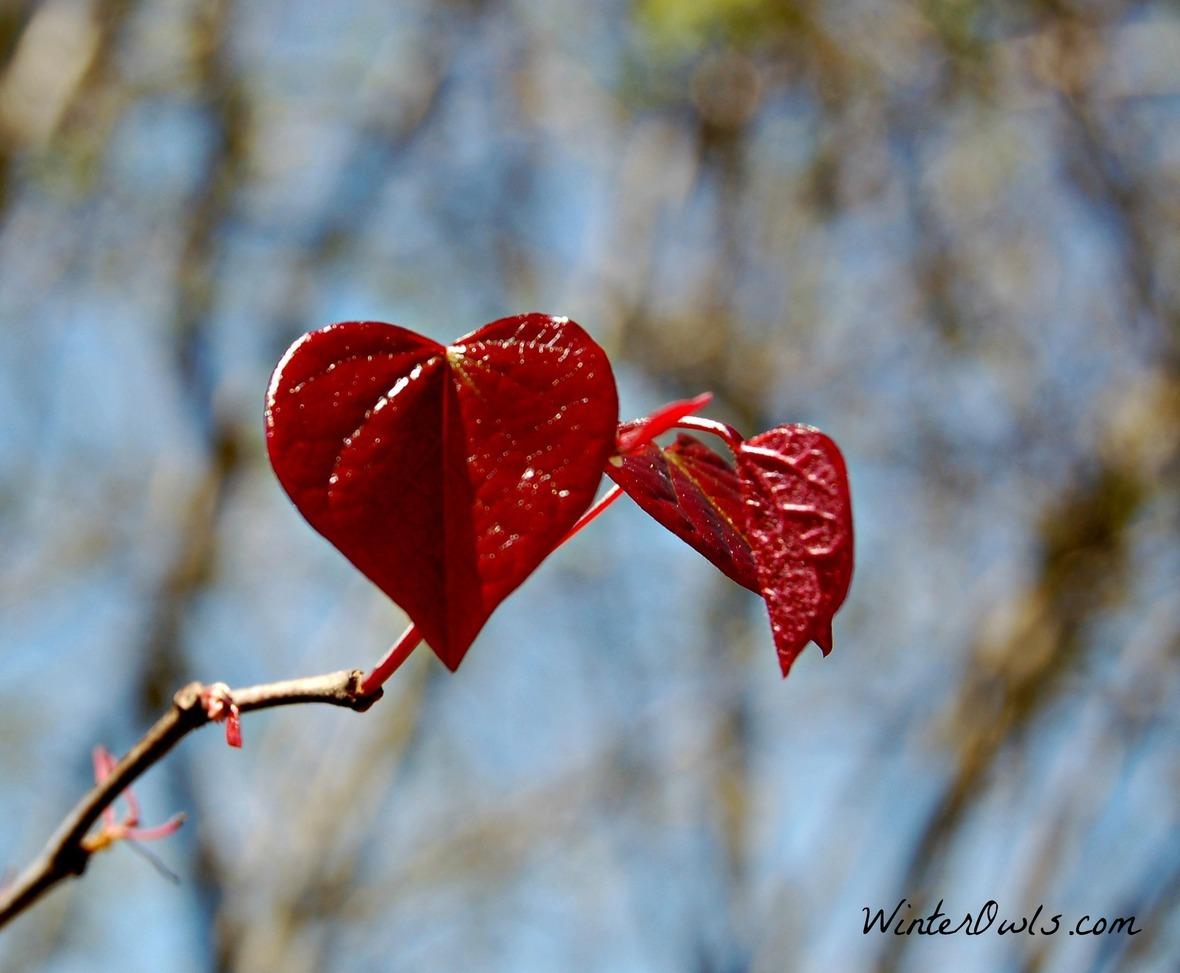 spring-heart-leavesjpg
