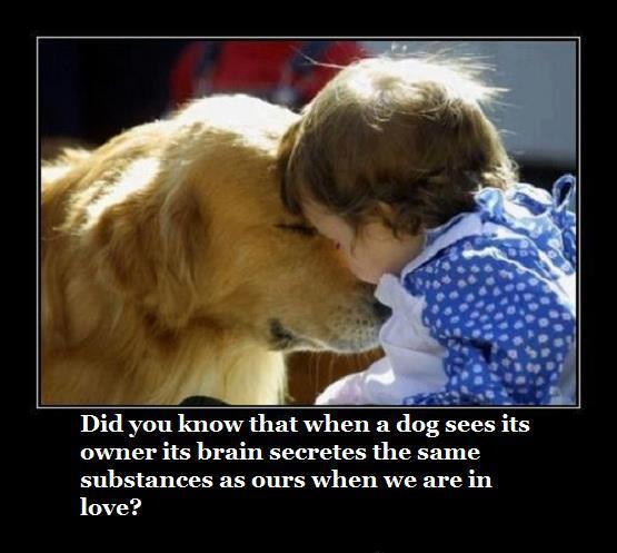 dog-and-human-love