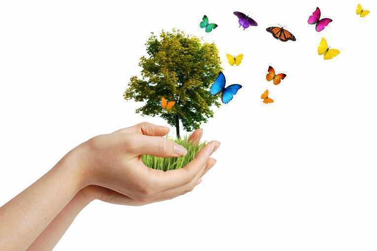 Earth-butterflies